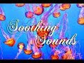 Deep Sea Relaxing Soundscape 🌊 Scuba Diver, Underwater Ambience - Soothing Sounds
