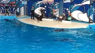 Морской котик и его представление
