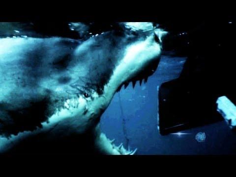FishingStrike - Legendary Panderichthys Catch Great White ... |Legendary Sharks