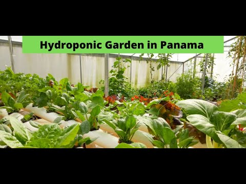 Hydroponic Garden in Panama