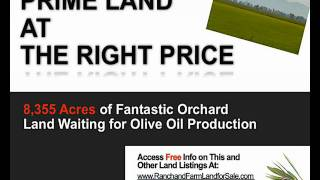 Olive Farm for sale - Olive farms for sale in California - Northern Ca
