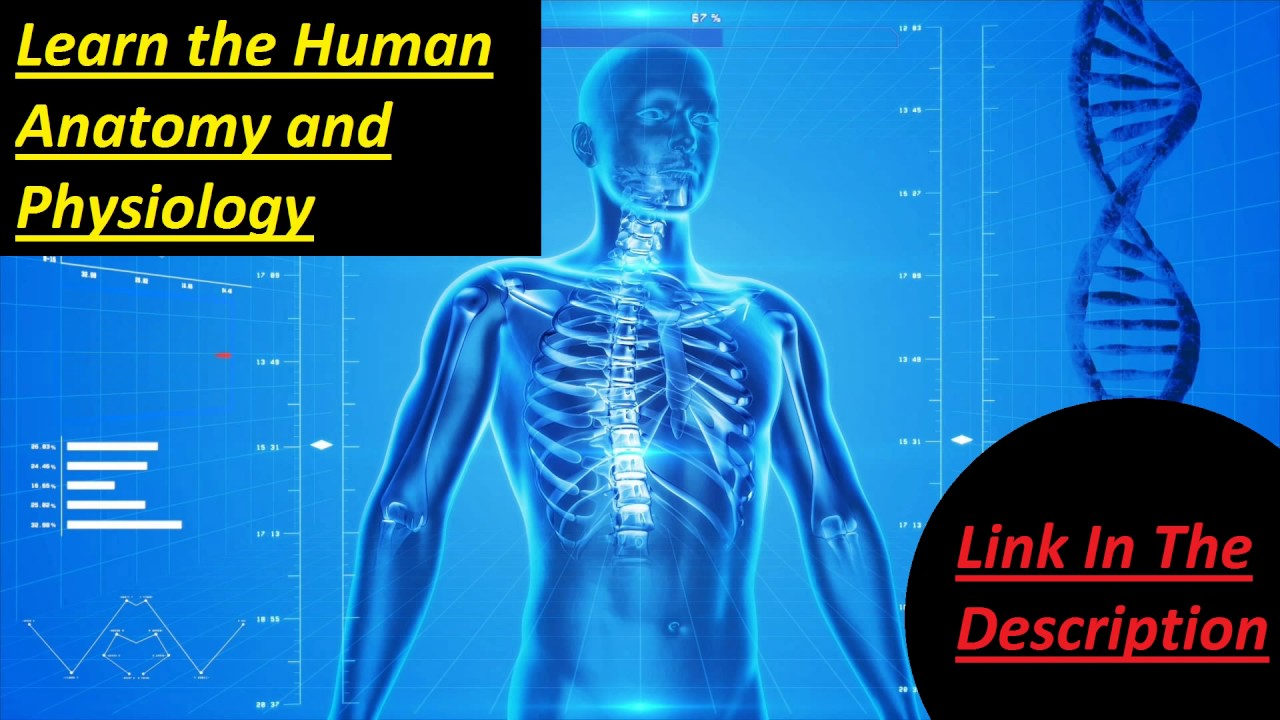 Human Body Structure Anatomy Youtube
