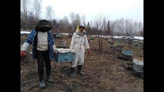 Ранняя выставка пчёл в непогоду.