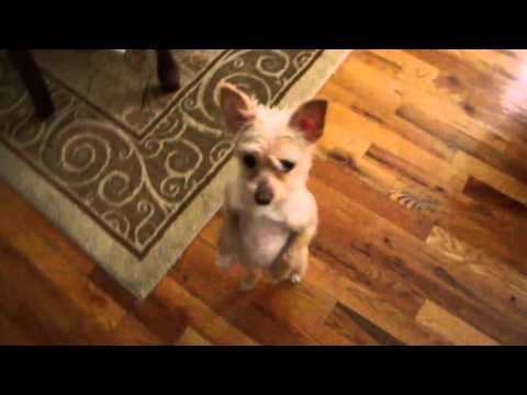☺ AFV Part 338 - Dogs & Puppies Are Awesome (Funny Clips Fail Montage Compilation)