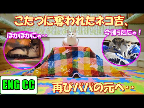 my-beloved-cat-who-was-captured-by-kotatsu-has-finally-returned!【eng-cc】