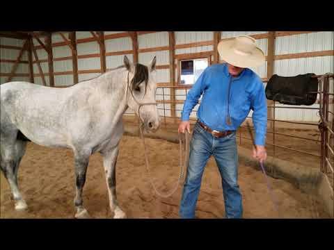 Granite #2, BLM Mustang Gelding, Sean Davies, ColoradoReinsman