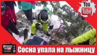 Падение 20 метровой сосны на лыжницу в С...