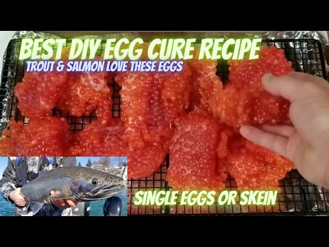 HOW TO CURE SALMON EGGS, Simple And Effective Recipe For Skeins Or Single Eggs