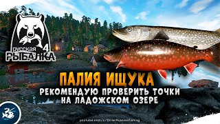Русская Рыбалка 4 Палия и Щука на Ладожском озере