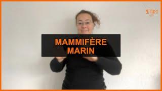 BIOLOGIE MARIN - Mammifère marin