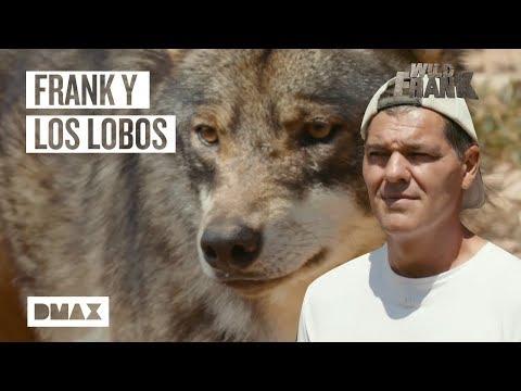Frank camina con Lobos   Wild Frank