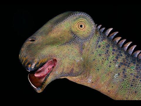 What dinosaur has 500 teeth - YouTube