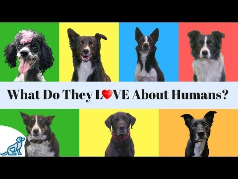 What Do Dogs Love The Most- About Their 'Humans'