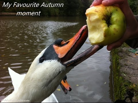 My Autumn for BBC Autumnwatch