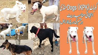 Dogs Sale in Pakistan   Dogs Mandi in KPK   Puppies For Sale   Dogs Purchase   کتوں کی منڈ ی  Visit