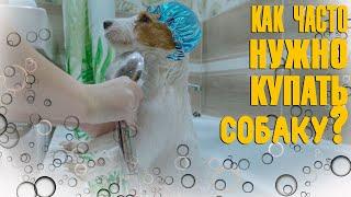 Уход за шерстью собаки Как часто нужно купать собаку Джек Рассел в ванне