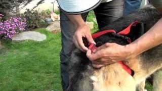 Artrosis y displasia de cadera en el perro