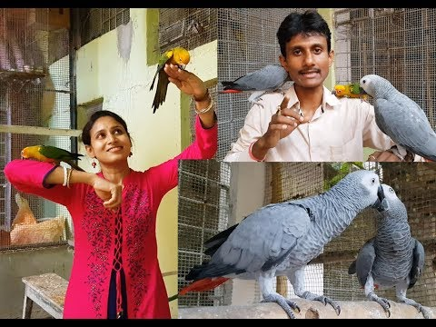 How To Know African Grey Parrot Is Male or Female and their Age.