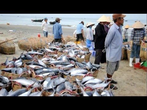 Vietnam's Fishing Industry Thrives