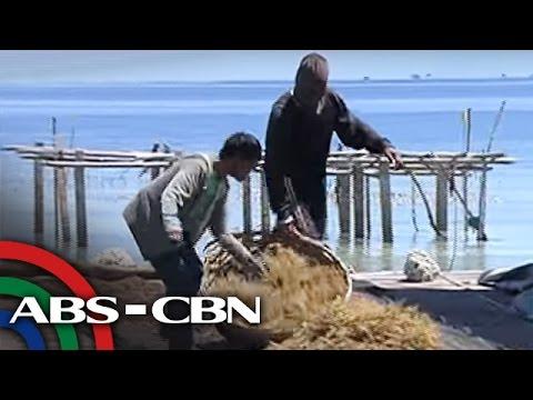 Bandila: How seaweed farming stopped dynamite fishing in Bohol