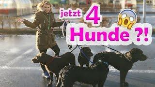 ♡ Milka Mittwoch ♡ jetzt 4 Labradore ?!