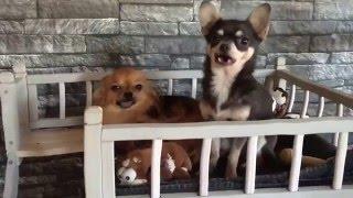 Sprookjesachtig Hondenhuisje - De Chihuahua Shop.nl