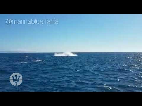 Rorcuales en migración,  Estrecho de Gibraltar  junio 2020