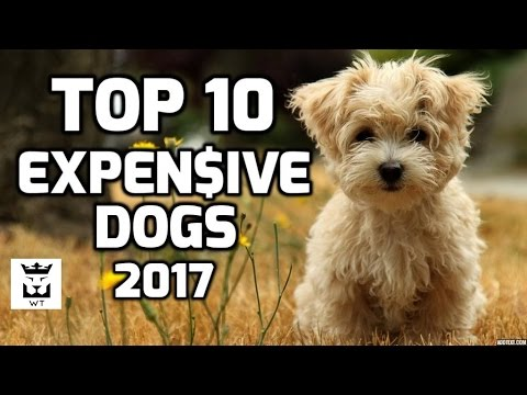 Top 10 Expensive Dogs 2017