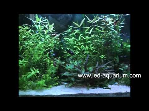 aquarium beleuchtung youtube. Black Bedroom Furniture Sets. Home Design Ideas