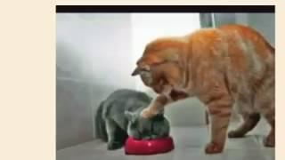 Śmieszne zwierzęta | Funny animals