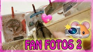 François live ❤ Fotos von Fans 2