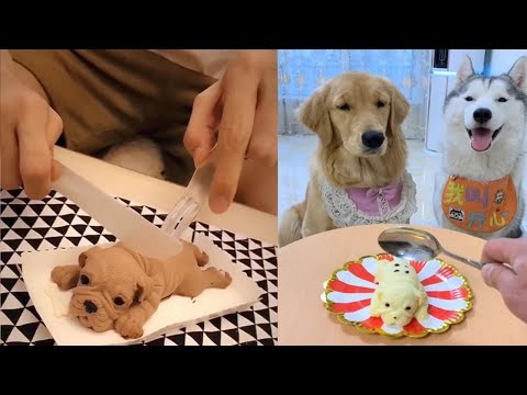 Dog Reaction to Cutting Cake - Funny Dog Cake Reaction Compi