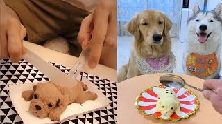 Dog Reaction To Cutting Cake Funny Dog Cake Reaction Compilation
