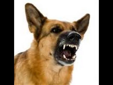 IP cameras to record barking dogs 24/7? | IP Cam Talk