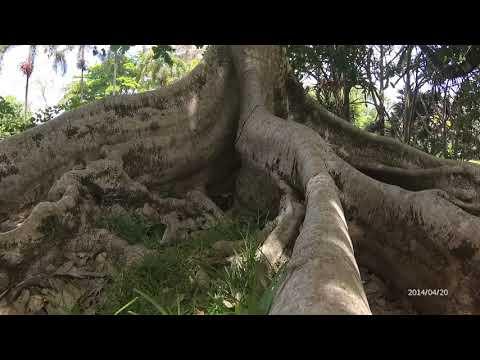 Botanic Garden Mauritius