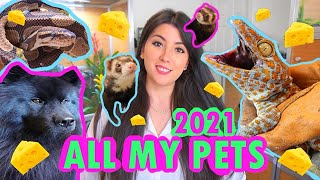ALL MY PETS 2021! | EMZOTIC