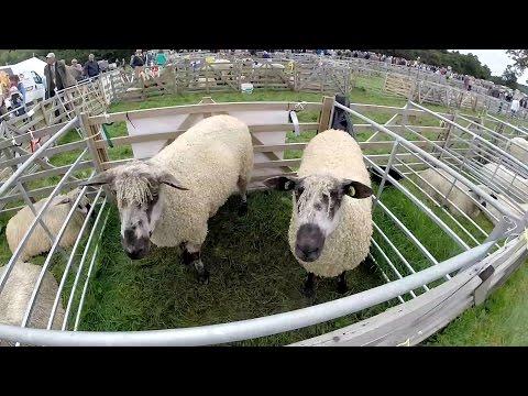 Nidderdale Agricultural Show 2016, Pateley Bridge North Yorkshire.