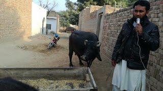 Sale Bhot Achi Video   Asdela