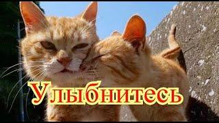 Кошки|Приколы с котами| Добрый позитив| Видео про котов| Животные|Создай себе хорошее настроение