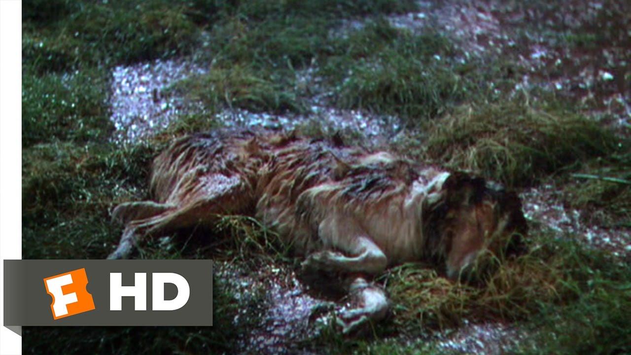 lassie come home 610 movie clip dally amp danl to the