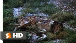 Lassie Come Home (6/10) Movie CLIP - Dally & Dan
