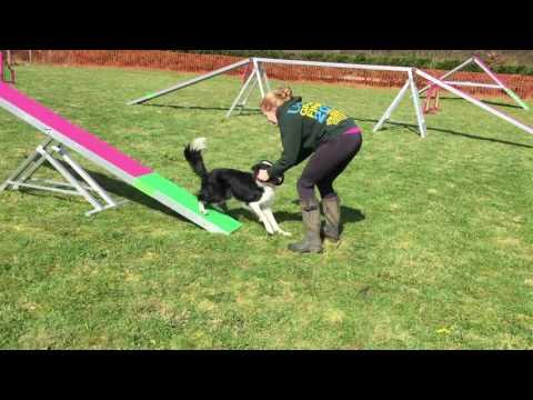 Envy Agility Training - March 2017 - 13 months