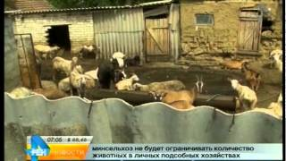 Минсельхоз РФ не планирует ограничивать число животных в личных подсобных хозяйствах