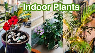 My New Indoor Plants Haul / ANNOUNCEMENT For Plant Lovers / Best Indoor Plants / Plants Shopping