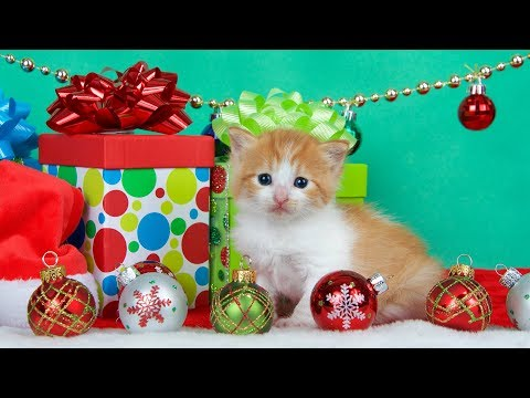 Getting a Kitten for Christmas Compilation (2017)