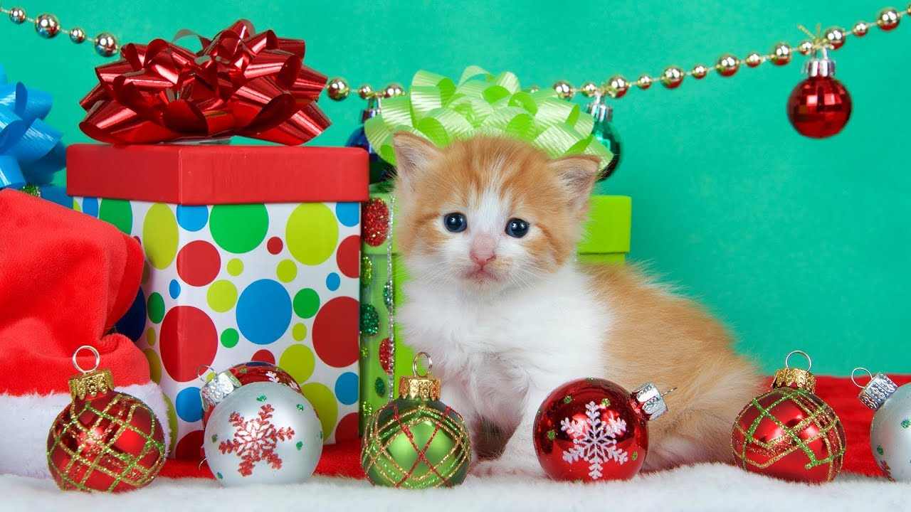 Getting a Kitten for Christmas Compilation (2018) - YouTube
