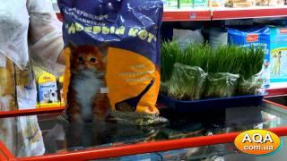 Наполнитель для кошачьего туалета • Добрый Кот