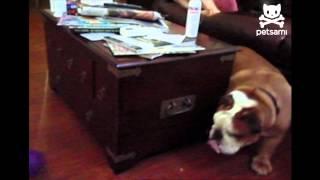 Petsami Top 5: Perpetual Pups