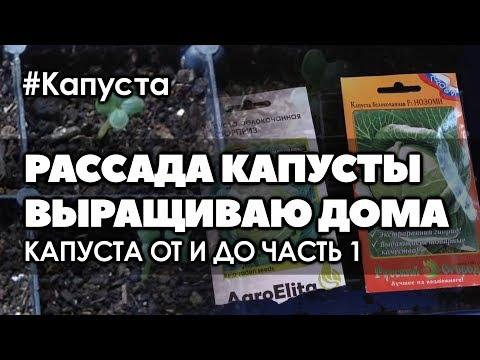 Выращивание ранней капусты в домашних условиях