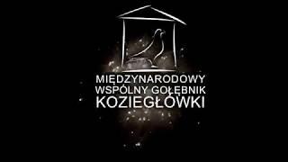 Heinz Meier - gołębie Janusza Szalkowskiego na sprzedaż - prezentacja